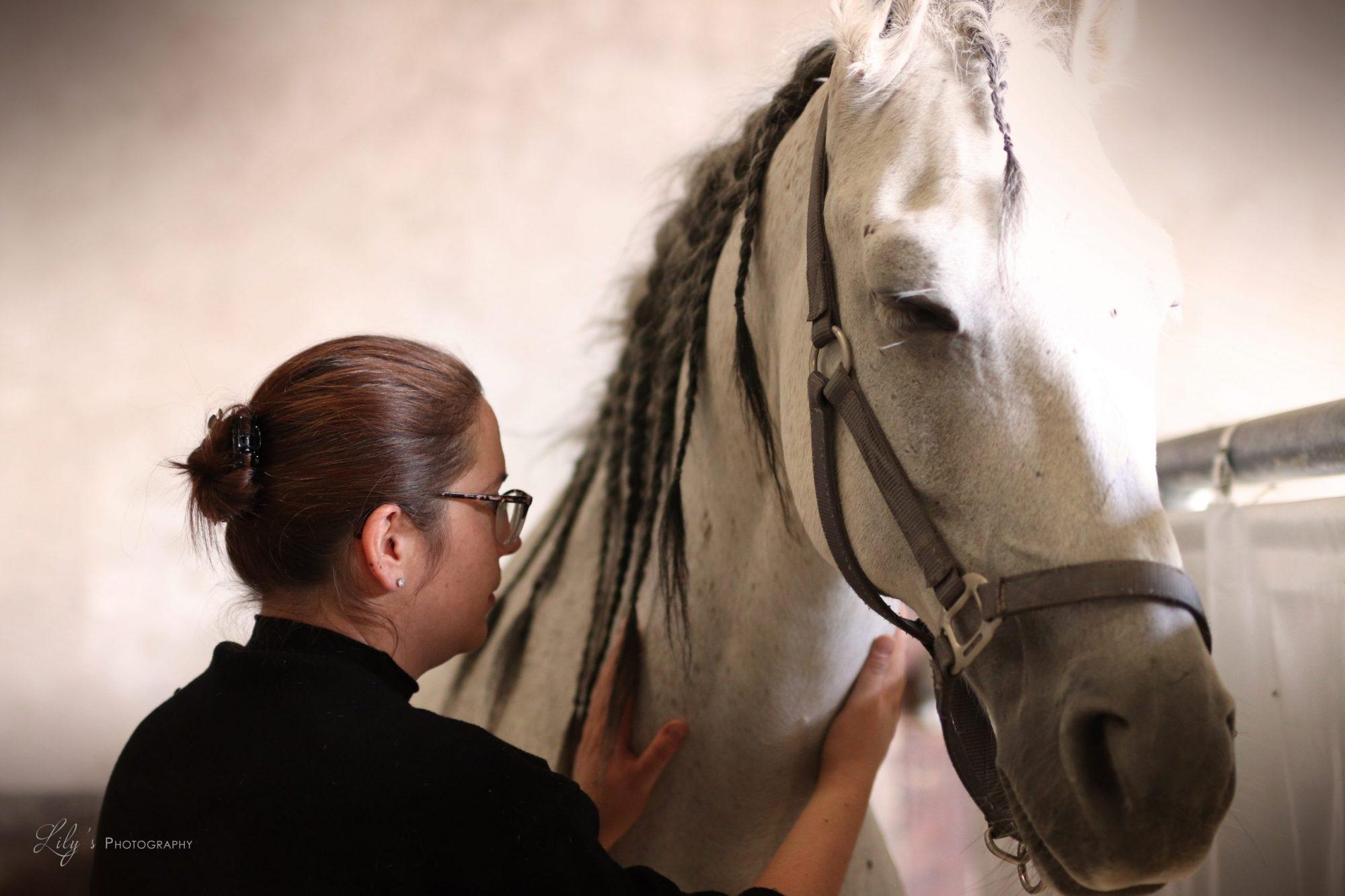 Shiatsu cheval équin moselle lorraine région grand est  luxembourg bien-être santé animale